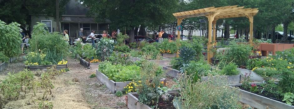 Tampa Heights Community Garden 10