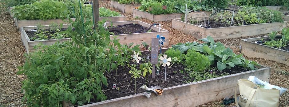 Tampa Heights Community Garden 11